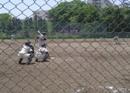 硬式野球(男子)